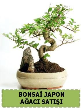 Bonsai japon  ağacı satışı Minyatür İthal  İzmir Konak yurtiçi ve yurtdışı çiçek siparişi