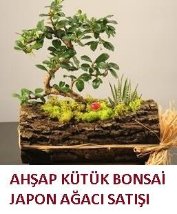 Ahşap kütük içerisinde bonsai ve 3 kaktüs  İzmir Konak çiçek servisi , çiçekçi adresleri