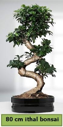 80 cm özel saksıda bonsai bitkisi  İzmir Konak uluslararası çiçek gönderme