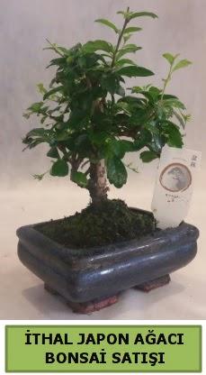 İthal japon ağacı bonsai bitkisi satışı  İzmir Konak uluslararası çiçek gönderme