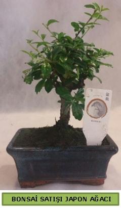 Minyatür bonsai ağacı satışı  İzmir Konak cicekciler , cicek siparisi