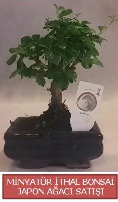 Küçük görsel bonsai japon ağacı bitkisi  İzmir Konak anneler günü çiçek yolla