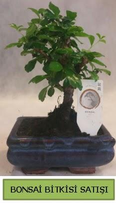 Bonsai ithal görsel minyatür japon ağacı  İzmir Konak hediye sevgilime hediye çiçek