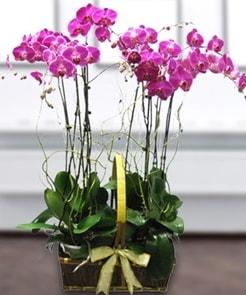 7 dallı mor lila orkide  İzmir Konak online çiçek gönderme sipariş