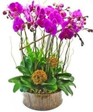 Ahşap kütükte lila mor orkide 8 li  İzmir Konak kaliteli taze ve ucuz çiçekler