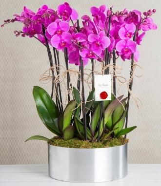11 dallı mor orkide metal vazoda  İzmir Konak online çiçek gönderme sipariş