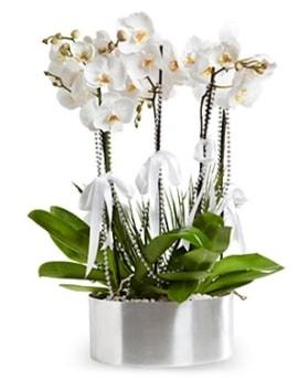 Beş dallı metal saksıda beyaz orkide  İzmir Konak cicek , cicekci