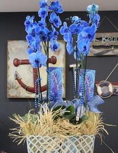 4 dallı özel mavi orkide  İzmir Konak online çiçekçi , çiçek siparişi