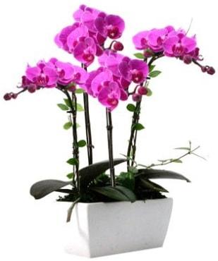 Seramik vazo içerisinde 4 dallı mor orkide  İzmir Konak 14 şubat sevgililer günü çiçek