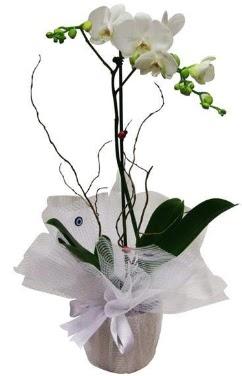 Tek dallı beyaz orkide  İzmir Konak İnternetten çiçek siparişi