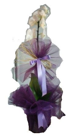 Tek dallı beyaz orkide süper kalite ithal  İzmir Konak çiçek mağazası , çiçekçi adresleri