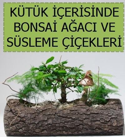 Kütük içerisinde bonsai japon ağaç bitkisi  İzmir Konak 14 şubat sevgililer günü çiçek