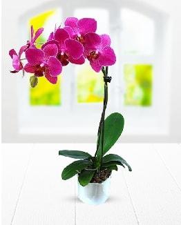 Tek dallı mor orkide  İzmir Konak 14 şubat sevgililer günü çiçek