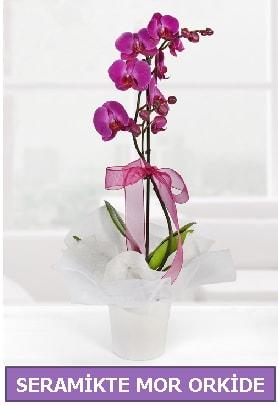 Seramik içerisinde birinci kalite tek dallı mor orkide  İzmir Konak çiçek siparişi vermek