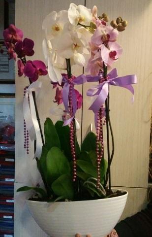 Mor ve beyaz ve pembe 6 dallı orkide  İzmir Konak hediye sevgilime hediye çiçek