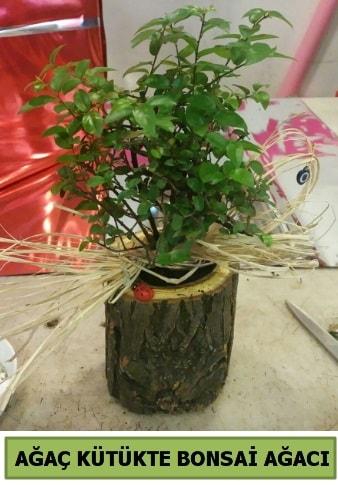 Doğal ağaç kütük içerisinde bonsai ağacı  İzmir Konak online çiçek gönderme sipariş