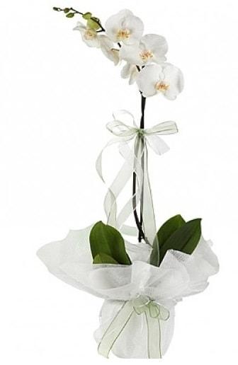 Tekli Beyaz Orkide  İzmir Konak çiçek online çiçek siparişi