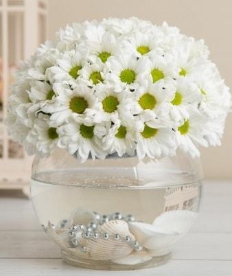 Fanusta beyaz Papatya  İzmir Konak 14 şubat sevgililer günü çiçek