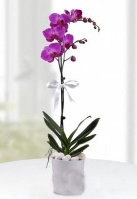 Tek dallı saksıda mor orkide çiçeği  İzmir Konak güvenli kaliteli hızlı çiçek