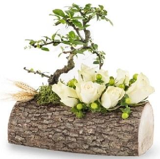 Doğal kütükte bonsai ağacı ve 7 beyaz gül  İzmir Konak online çiçek gönderme sipariş