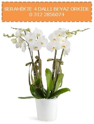 Seramikte 4 dallı beyaz orkide  İzmir Konak güvenli kaliteli hızlı çiçek