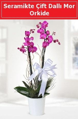 Seramikte Çift Dallı Mor Orkide  İzmir Konak çiçekçi telefonları