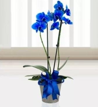 Çift dallı mavi orkide  İzmir Konak 14 şubat sevgililer günü çiçek