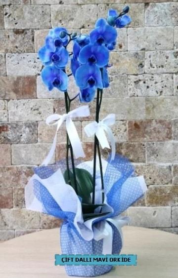 çift dallı ithal mavi orkide  İzmir Konak cicek , cicekci