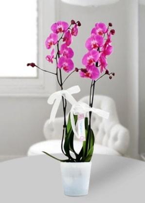 Çift dallı mor orkide  İzmir Konak güvenli kaliteli hızlı çiçek