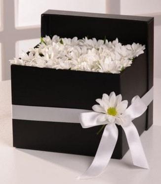 Kutuda beyaz krizantem papatya çiçekleri  İzmir Konak çiçek mağazası , çiçekçi adresleri
