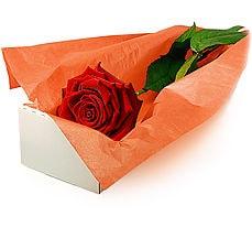 İzmir Konak hediye çiçek yolla  Kutuda tek gül özel kisilere